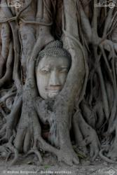 11 - Buddha ayutthaya - Andrea Bergamini