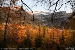09 - Primi raggi sui larici - Giorgio De Dominici
