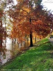 18 - Contrasto di colori - Ilirjana Elezi